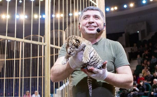В Тульском цирке родился тигролев Пряник