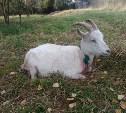 В Тульской области стая бродячих собак перегрызла стадо коз