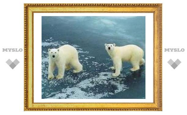 Арктика скоро останется без льда