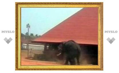 Взбесившийся слон убил в храме на юге Индии трех человек