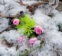 Погода в Туле 31 марта: осадки, гололед и оттепель