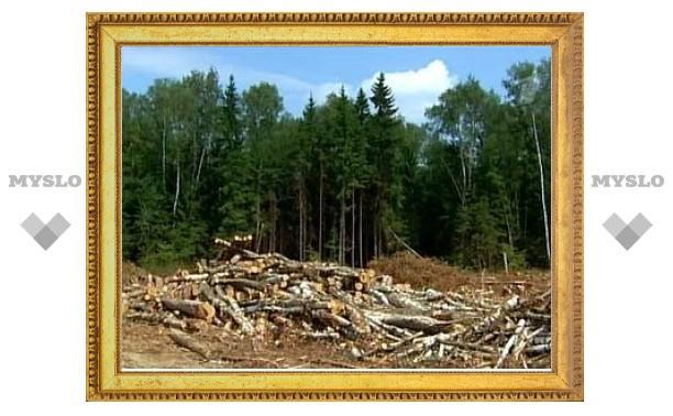 Минприроды поддержало прокладку трассы через Химкинский лес