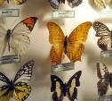 Коллекция Тульского экзотариума отправится в Узловую
