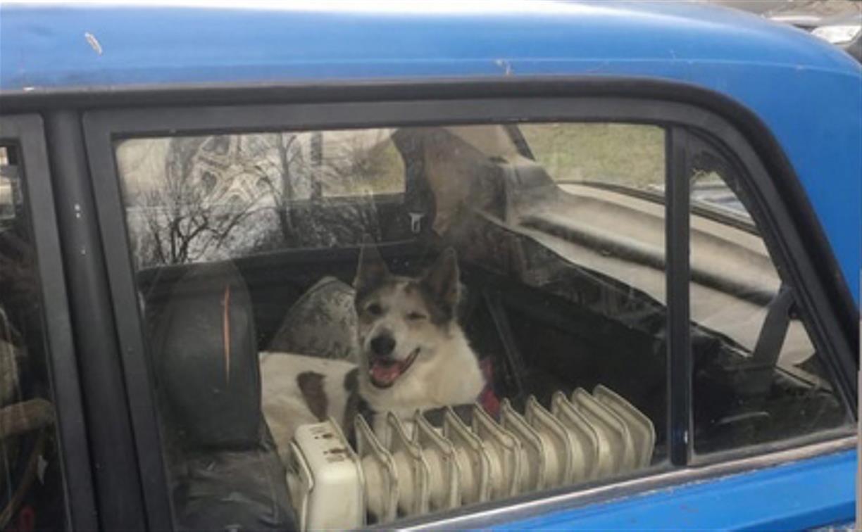 «Выпустите собаку!»: туляки обсуждают запертого в машине пса
