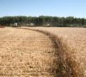 В Тульской области не обрабатывается 29% земель сельхозназначения