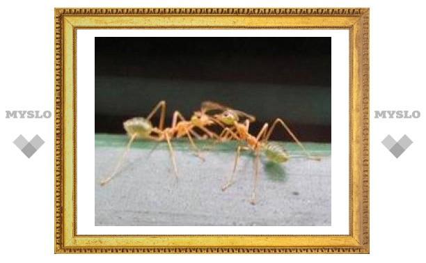 Коррупция и мошенничество в муравьином обществе
