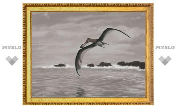 Ученые реабилитировали летные качества птерозавров
