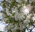 В Туле расцвели яблони: весенний фоторепортаж от Myslo