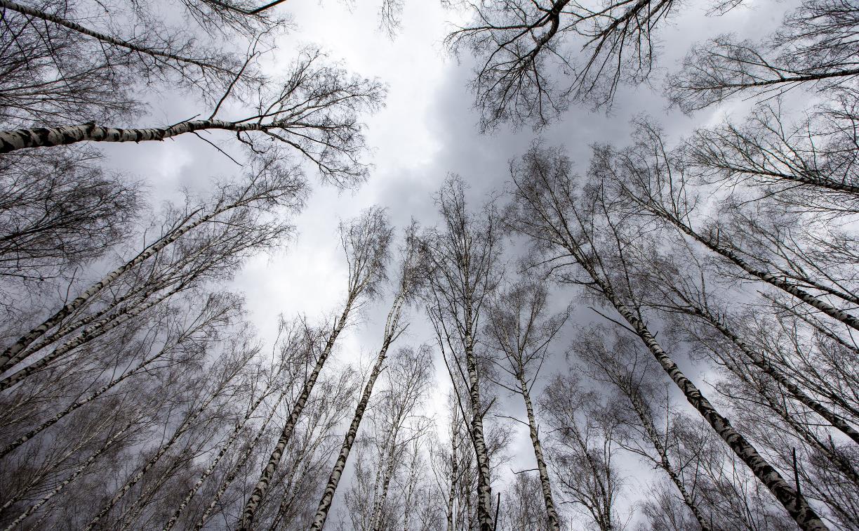 Погода в Туле 18 апреля: дождливо и прохладно