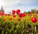 Много солнца и без осадков: Синоптики рассказали о погоде «миллион на миллион» в Центральной России