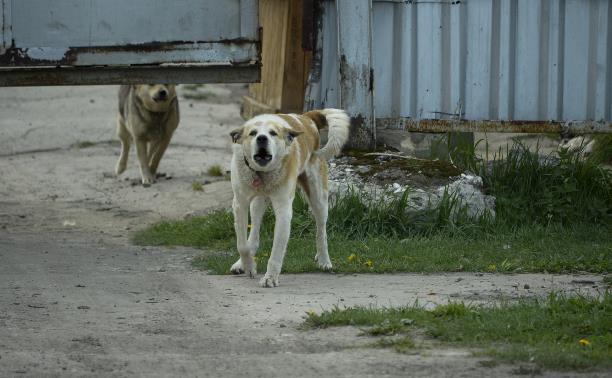Контракты кончились: в Туле некому отлавливать бездомных собак