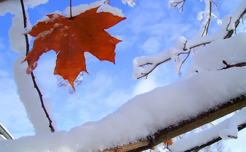 Погода в Туле 24 ноября: ночью мороз, днём до +2 и без осадков