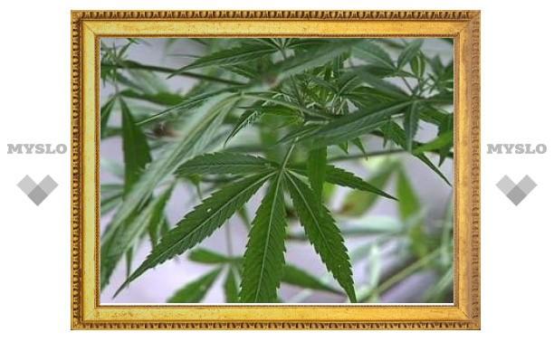 Плантации марихуаны будут искать при помощи беспилотников