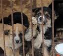 Тульский приют для животных «Любимец» просит помощи у губернатора