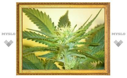 Тульские наркополицейские изъяли крупную партию марихуаны