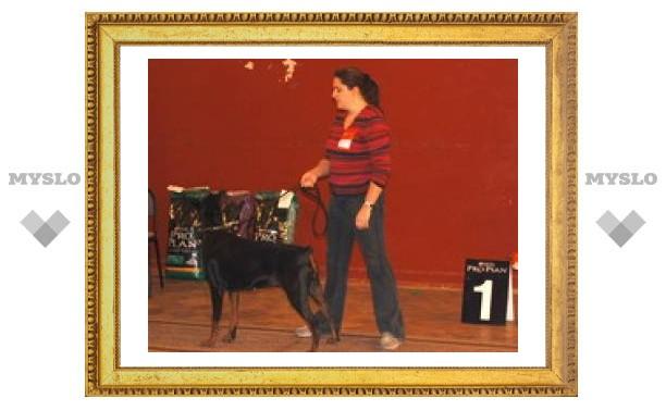 В Туле прошла региональная выставка собак