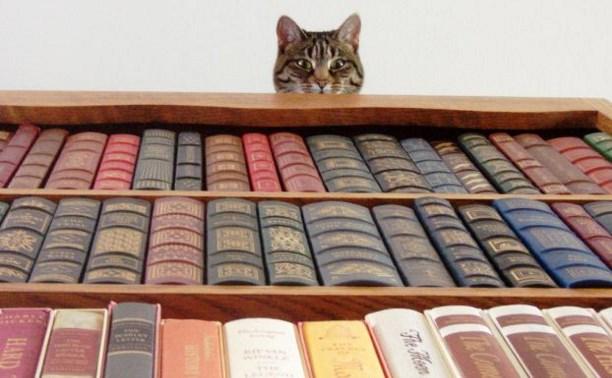 В День города в Туле пройдет библиофест «Читай, Тула!»