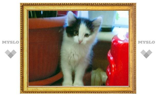 Тульские котята ищут хозяев
