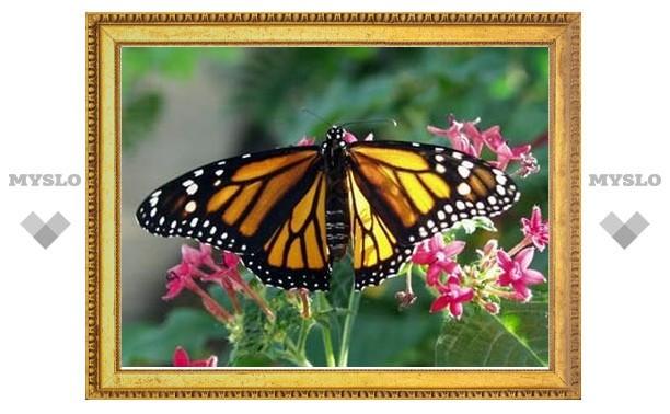В антеннах бабочек нашли часы