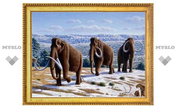 Ученые из Японии, России и США решили возродить мамонтов