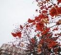 Погода в Туле 31 октября: потепление, ветер и слякоть