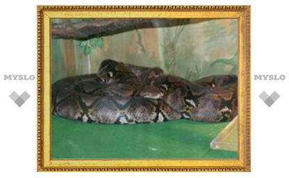Тулякам покажут ядовитых змей