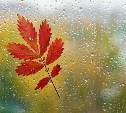 Первая неделя осени в Тульской области будет тёплой и дождливой