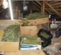 Туляк выращивал на даче коноплю и продавал её