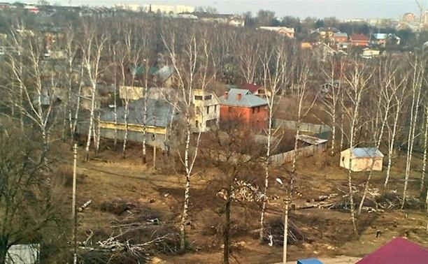 Частник срубил 25 деревьев в березовой роще