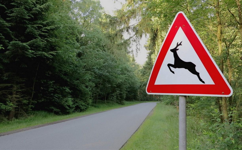 Тульских водителей предупреждают о диких животных на дорогах