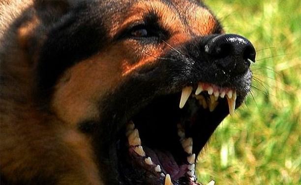 В Киреевском районе полицейские застрелили бешеную собаку