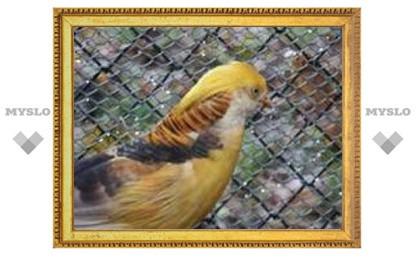 В центре Тулы на дереве обнаружили фазана