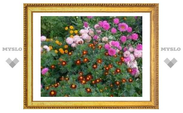 Ко Дню Победы в Туле высадят 100 тысяч цветов