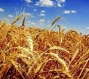 В 2019 году в Тульской области невостребованную землю вернут в сельхозоборот