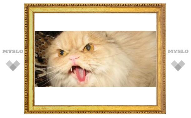 В Туле кот едва не убил хозяйку
