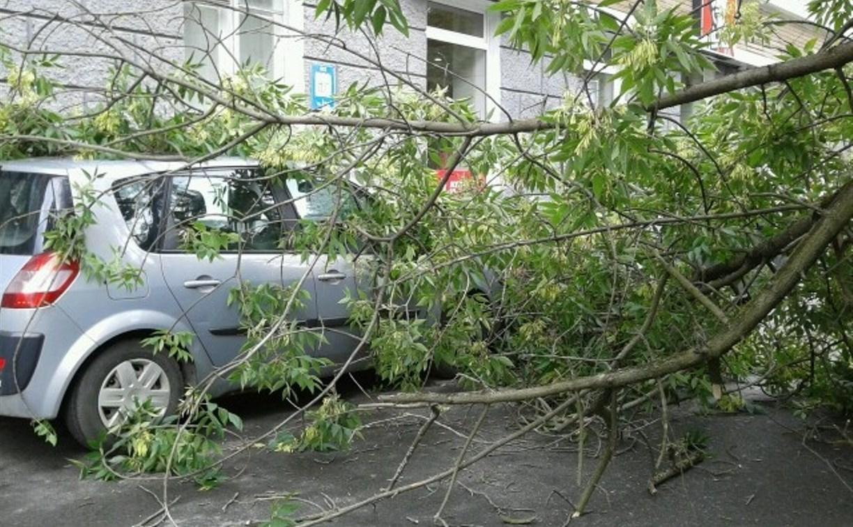 Администрация Ефремова заплатит жителю за падение дерева на его авто