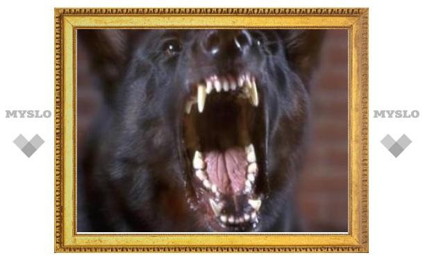 Московские ветеринары поместили в карантин десятки бродячих собак