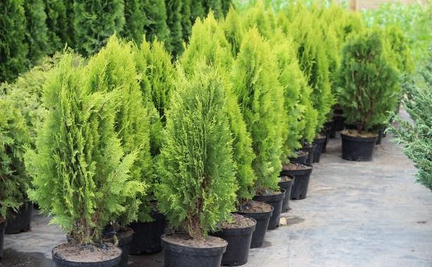Полтысячи деревьев высадят на территории мемориала «Защитникам неба Отечества»