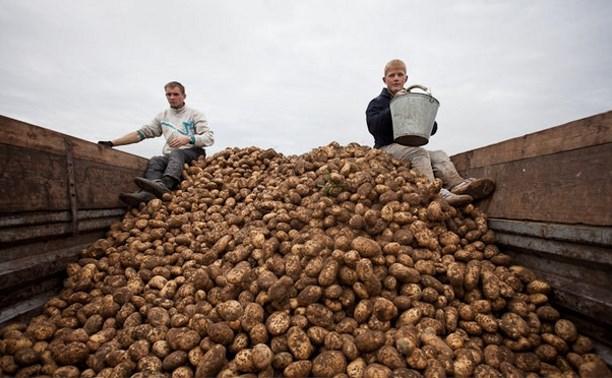 Российских студентов хотят снова отправлять «на картошку»
