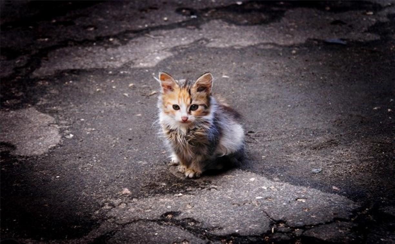 Житель Заокска на глазах у ребёнка убил котёнка об стену