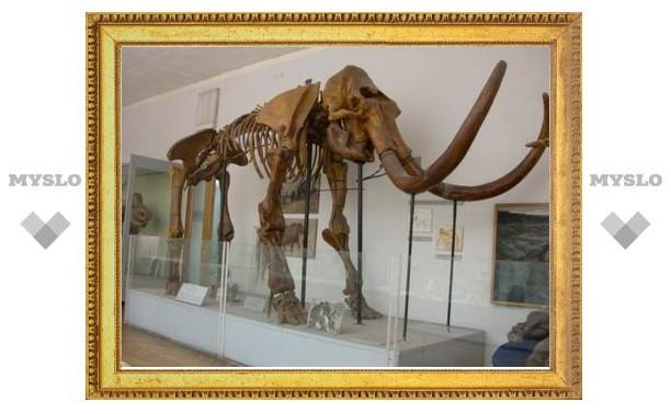 Жительница Уфы нашла на берегу реки останки мамонта