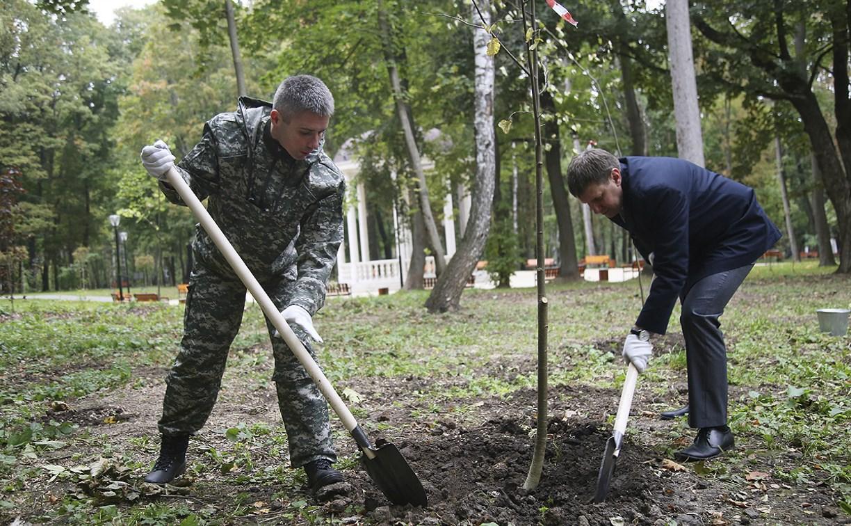 В Туле в Центральном парке высадили 270 саженцев липы