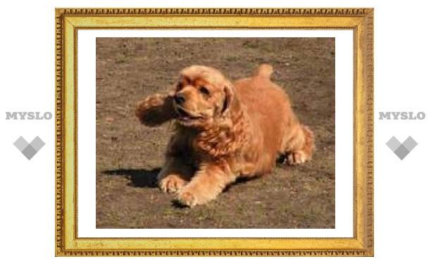 В Туле спасли щенка, проглотившего шприц