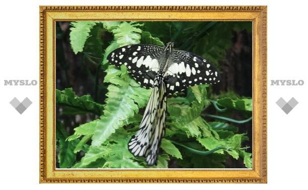 Тульский зоотеррариум показал тулякам удивительных бабочек