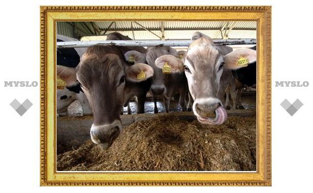 Тульский «Ингосстрах» застраховал поголовье скота почти на 40 миллионов рублей