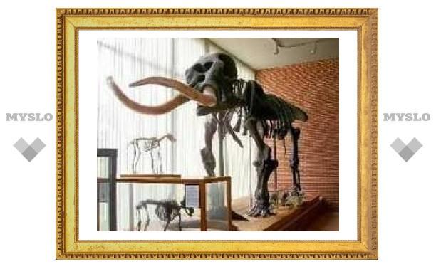Фото скелет фото группа