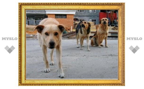 В Новомосковске Тульской области построят приют для бродячих животных?
