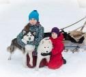 В Центральном парке можно покататься на собачьих упряжках