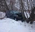 Житель Москвы на «Рено» на скорости вылетел в кювет и врезался в дерево