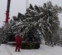 Через Тулу провезут ёлку для Крыма